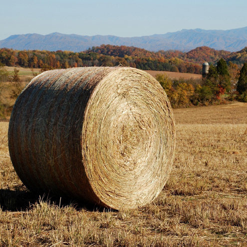 Switchgrass bale on AgResearch and Education Center at Greeneville